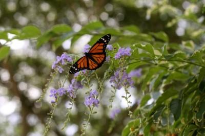 Butterfly-800x533
